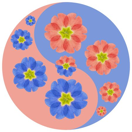 Floral symbol Yin-Yang. Primula. Geometric pattern of Yin-Yang symbol, from plants on colored background in Oriental style. Yin Yang symbol from flowers, petals. Flower illustration of mandala. 스톡 콘텐츠