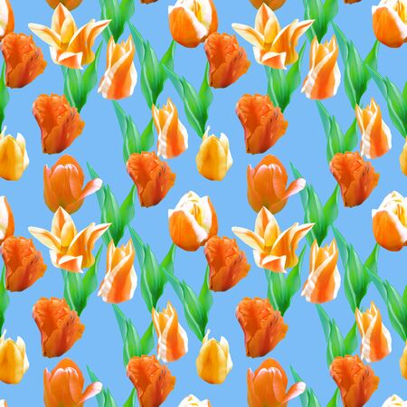 Tulip. Illustration, texture of flowers. Seamless pattern for continuous replicate. Floral background, photo collage for production of textile, cotton fabric. For use in wallpaper, covers 스톡 콘텐츠