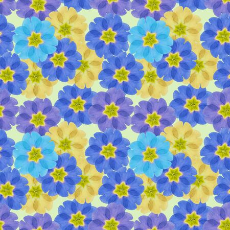 Primula, primrose. Illustration, texture of flowers. Seamless pattern for continuous replicate. Floral background, photo collage for production of textile, cotton fabric. For use in wallpaper, covers 스톡 콘텐츠