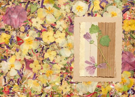 Background of fragments of broken flowers and leaves. Scrapbooking element consists mosaic of flowers, petals and frames, corners. Rustic, country style album page in scrapbook with frames for photo.