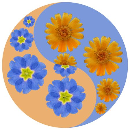 Floral symbol Yin-Yang. Primula, calendula. Geometric pattern of Yin-Yang symbol, from plants on colored background in Oriental style. Yin Yang symbol from flowers, petals. Flower illustration of mand