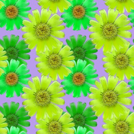 Marigold, calendula. Illustration, texture of flowers. Seamless pattern for continuous replicate. Floral background, photo collage for production of textile, cotton fabric. For use in wallpaper, cover