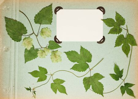 Page from an old photo album green color. Scrapbooking element decorated with leaves, flowers and petals wild flowers. Rustic, country style album page in scrapbook with frames for photo.