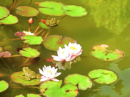 Digital artwork in watercolor painting style.  Lake, large leaves and Lily flowers, frog or toad, on the water. Abstract summer watercolor landscape. 스톡 콘텐츠