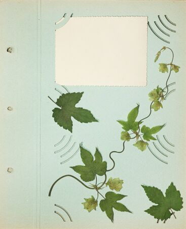 Page from an old photo album green color. Hop. Scrapbooking element decorated with leaves, flowers and petals flowers. For cards, invitations, congratulations. Use in scrapbooking, greetings.