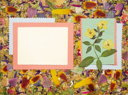 Background of fragments of broken flowers and leaves. Scrapbooking element consists mosaic of flowers, petals an. For cards, invitations, congratulations. Use in greetings, scrapbooking. 스톡 콘텐츠