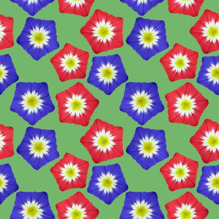 Bindweed. Illustration, texture of flowers. Seamless pattern for continuous replication. Floral background, photo collage for textile, cotton fabric. For use in wallpaper, covers