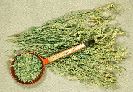 Melilot. Dry herbs for use in alternative medicine, phytotherapy, spa or herbal cosmetics. Preparing infusions, decoctions or tinctures. For powders, ointments, oil or tea, bath Reklamní fotografie