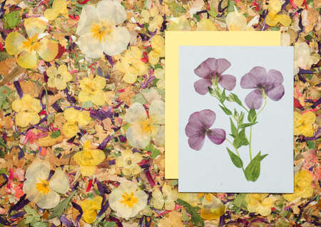 Background of fragments broken flowers and leaves. Scrapbooking element consists mosaic of flowers and petals. For cards, invitations and congratulations. Use in greetings, scrapbooking.