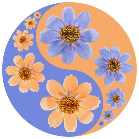 Floral symbol Yin-Yang. Cosmos. Geometric pattern of Yin-Yang symbol, from plants on colored background in Oriental style. Yin Yang symbol from flowers, petals. Flower illustration of mandala.