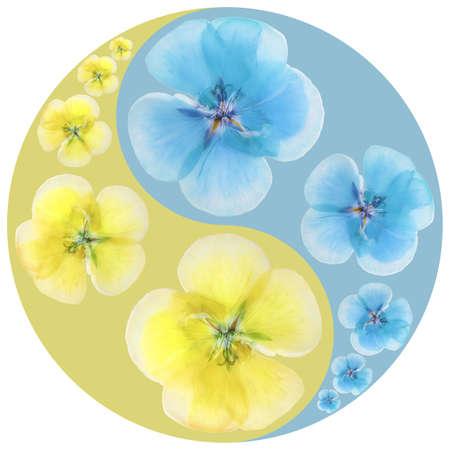 Floral symbol Yin-Yang. Geranium. Geometric pattern of Yin-Yang symbol, from plants on colored background in Oriental style. Yin Yang symbol from flowers, petals. Flower illustration of mandala. Reklamní fotografie