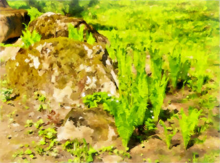 Watercolor drawing. Watercolor landscape of the park area. Park landscape, rocks covered with moss, fern on a spring day. Digital painting illustration.