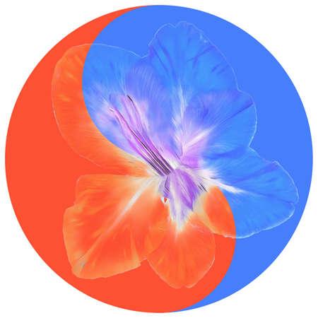 Floral symbol Yin-Yang. Gladiolus. Geometric pattern of Yin-Yang symbol, from plants on colored background in Oriental style. Yin Yang symbol from flowers, petals. Flower illustration of mandala.