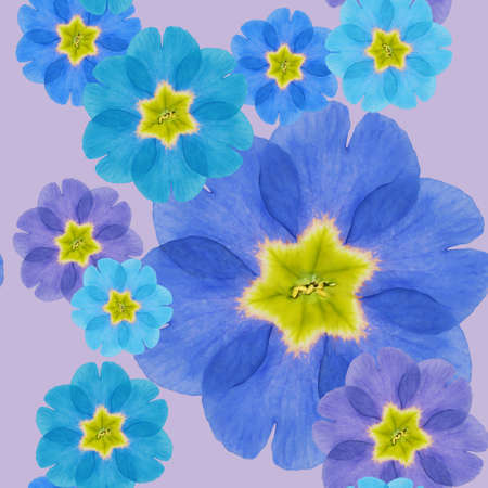 Primula, primrose. Illustration, texture of flowers. Seamless pattern for continuous replication. Floral background, photo collage for textile, cotton fabric. For use in wallpaper, covers