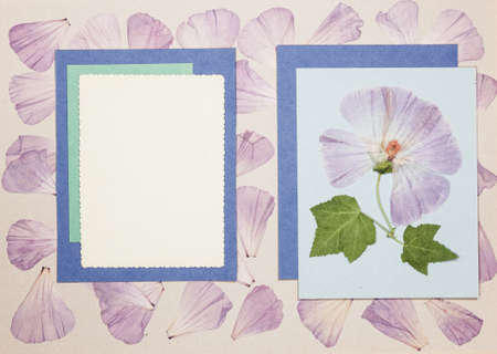 Page from an old photo album. Flowers lavatera. Scrapbooking element decorated with leaves, flowers and petals flowers. For cards, invitations und congratulations. Use in scrapbooking, greetings.