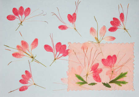 Page from an old photo album. Flowers cleome. Scrapbooking element decorated with leaves, flowers and petals flowers. For cards, invitations und congratulations. Use in scrapbooking, greetings. 스톡 콘텐츠