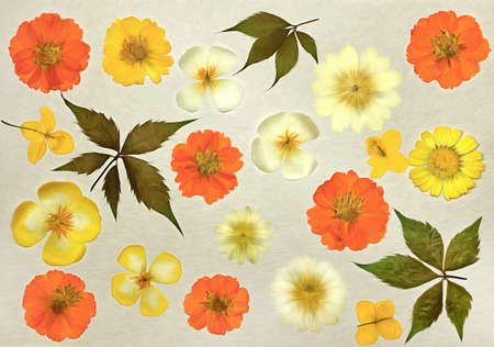 Page from old photo album. Cosmos, kosmeya flowers in watercolor style. For texture, wrapper pattern or greeting, card, postcards. Digital painting-illustration. Watercolor drawing. Scrapbooking element.