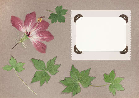 Page from an old photo album. Flowers hibiscus. Scrapbooking element decorated with leaves, flowers and petals flowers. For cards, invitations und congratulations. Use in scrapbooking, greetings. Imagens