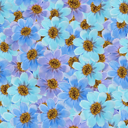 Cosmos. Illustration, texture of flowers. Seamless pattern for continuous replication. Floral background, photo collage for textile, cotton fabric. For wallpaper, covers, print. Imagens