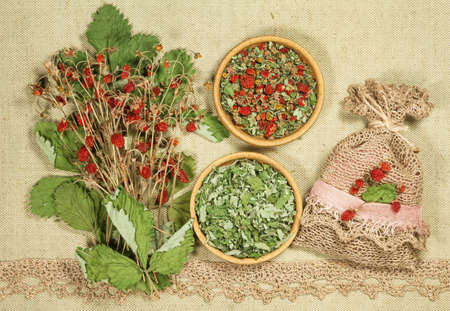 Strawberry. Dry herbs for use in alternative medicine, phytotherapy, spa or herbal cosmetics. Preparing infusions, decoctions or tinctures. For powders, ointments, oil or tea, bath.