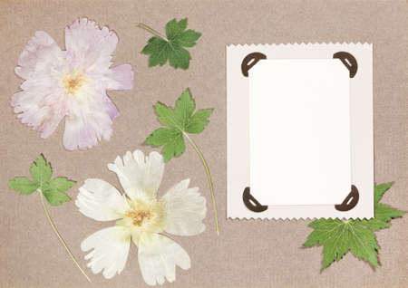 Page from an old photo album. Flowers mallow. Scrapbooking element decorated with leaves, flowers and petals flowers. For cards, invitations und congratulations. Use in scrapbooking, greetings. Imagens