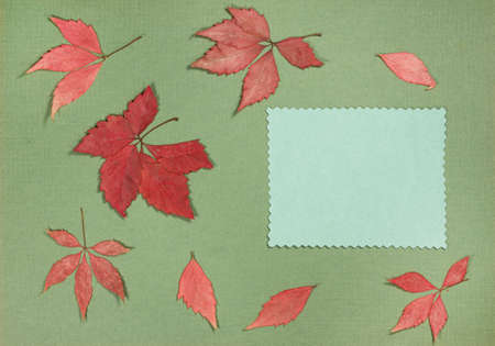 Page from an old photo album. Scrapbooking element decorated with leaves, flowers and petals flowers. For cards, invitations und congratulations. Use in scrapbooking, greetings.