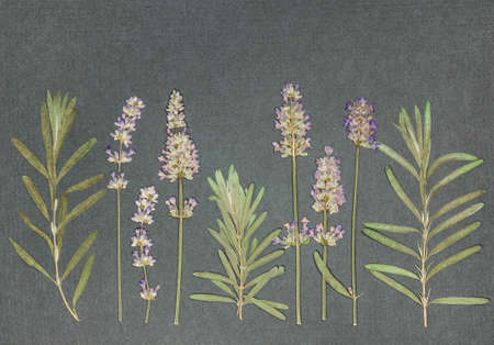 Page from an old photo album. Flowers lavender. Scrapbooking element decorated with leaves, flowers and petals flowers. For cards, invitations und congratulations. Use in scrapbooking, greetings.