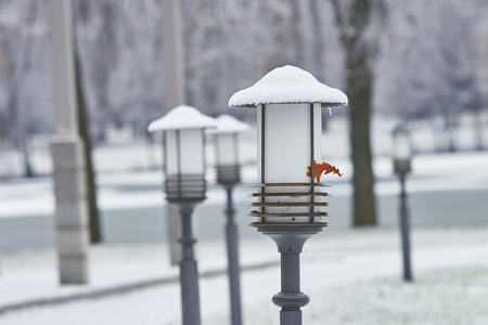Lamp in the winter park