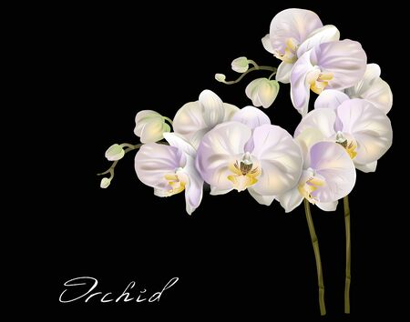 Vector illustration of Luxurious orchid flowers for invitation, sales, packaging, natural cosmetics, perfume. Tropical flower design element on black background. Illustration