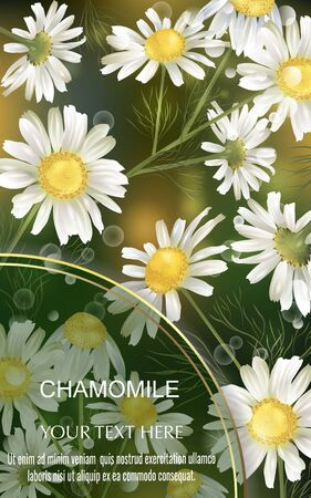 Template for greeting cards, wedding decorations, invitation, sales, packaging, cosmetics, perfume. Vector banner with Luxurious chamomile flowers. Space for text. Illustration