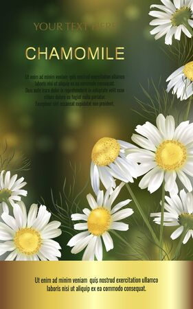 Vector banner with chamomile flowers for invitation, packaging, cosmetics, perfume, healthy food. Space for text. Illustration