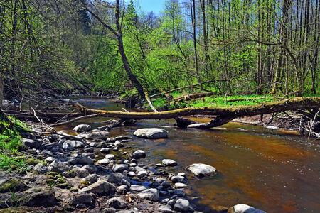 Frühling auf dem kleinen Wald Fluss Kornevka Stradick, Region Kaliningrad, Russland
