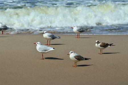 landfall: Seagulls on a sandy beach and sea surf