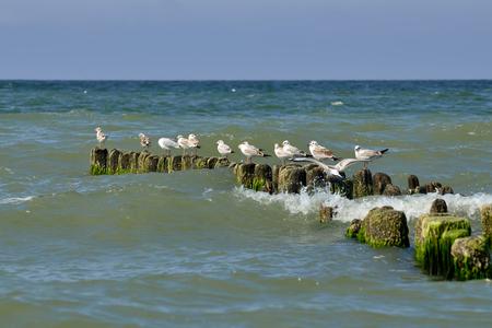 Möwen sitzen auf dem Wellenbrecher