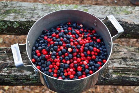 Ripe berries of lingonberry and blueberry close up lie in a saucepan