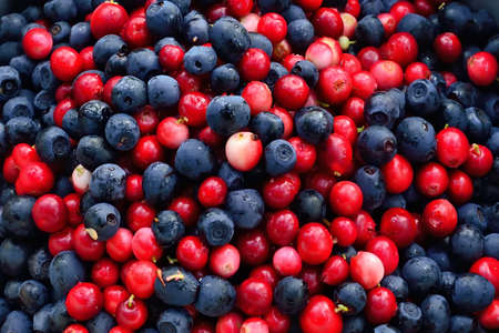 Ripe cranberries and blueberries close up. Natural background