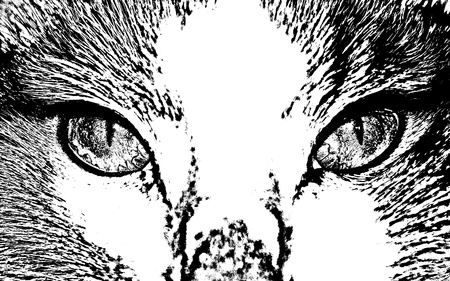 primer plano cara: Cara de gato de vector de cerca         Vectores