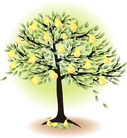 fruit tree with leafs and pears isolated on white    Vector