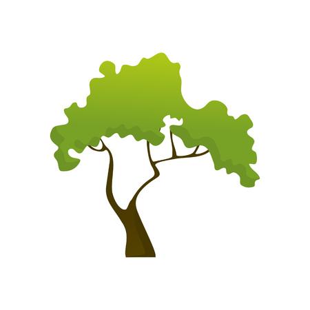 Isolated Common Jungle Tree Plant Vector Illustration Graphic Design