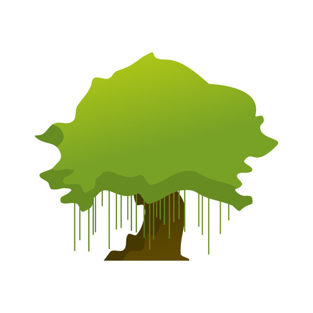 Isolated Old Oak Tree Plant Vector Illustration Graphic Design