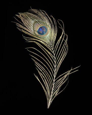Una pluma de pavo real, una hermosa pluma sobre un fondo negro, con un patrón de ojos. Foto de archivo