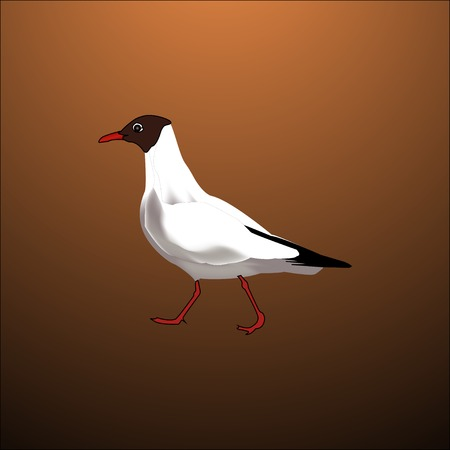 white bird seagull isolated with brown background