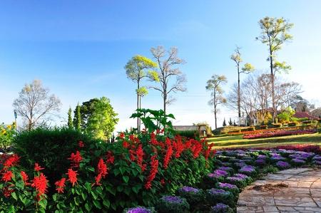 Beautiful flower in a garden  Stock Photo