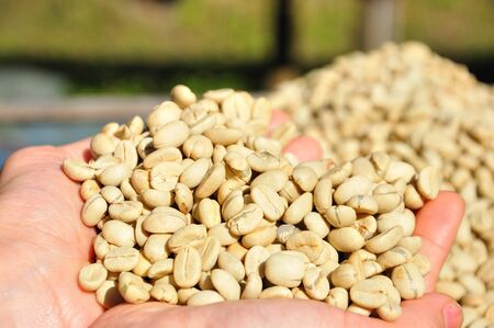 Raw coffee beans photo