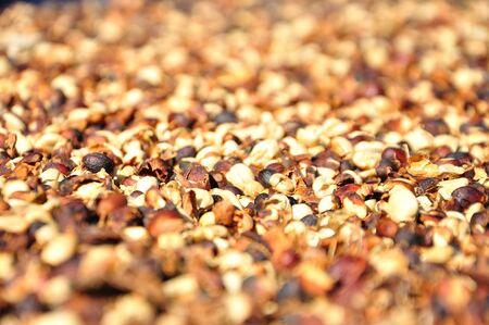 Raw coffee beans photo