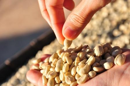 ejotes: Granos de caf� crudos