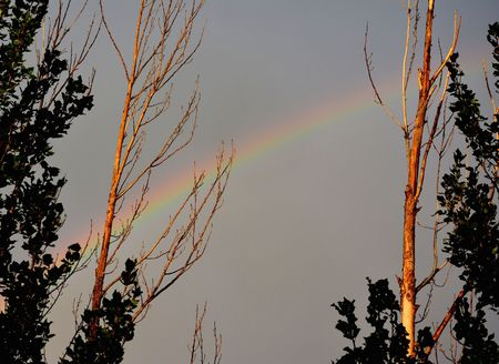 Rainbow between trees at campground after rainstorm in Livingston Montana