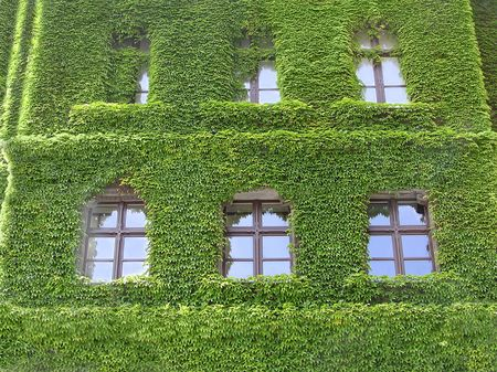 Building, covered with ivy green leaves