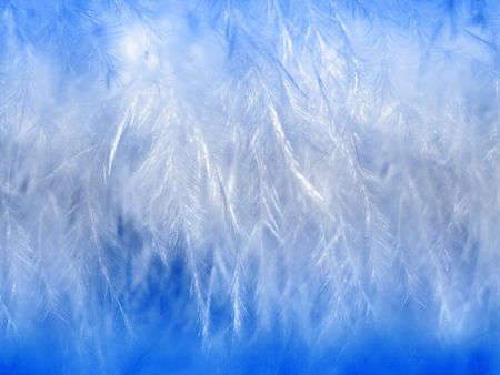 White thin feathers and down at blue background Stock Photo