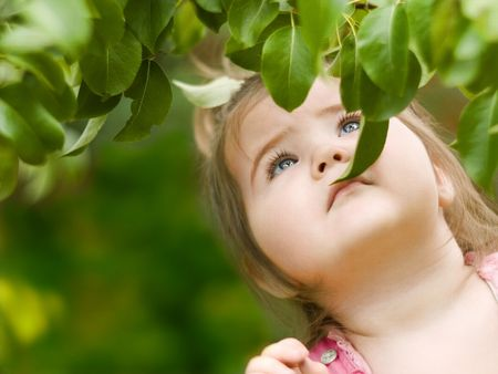 Where hide the pear at this tree?